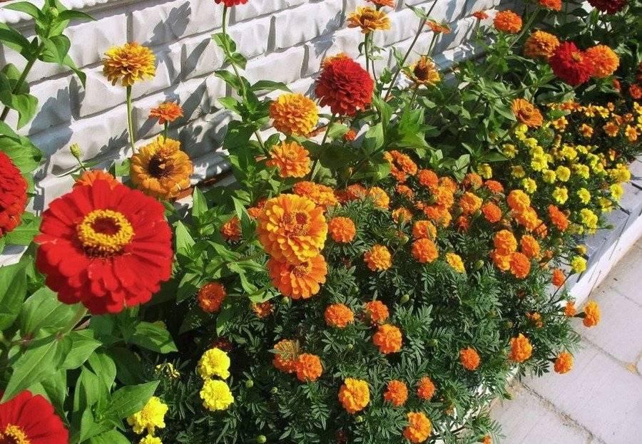 Как оформить клумбу из многолетников и декоративных цветов, чтобы цвела все лето: схема для ландшафтного дизайна с названиями  - 23 фото