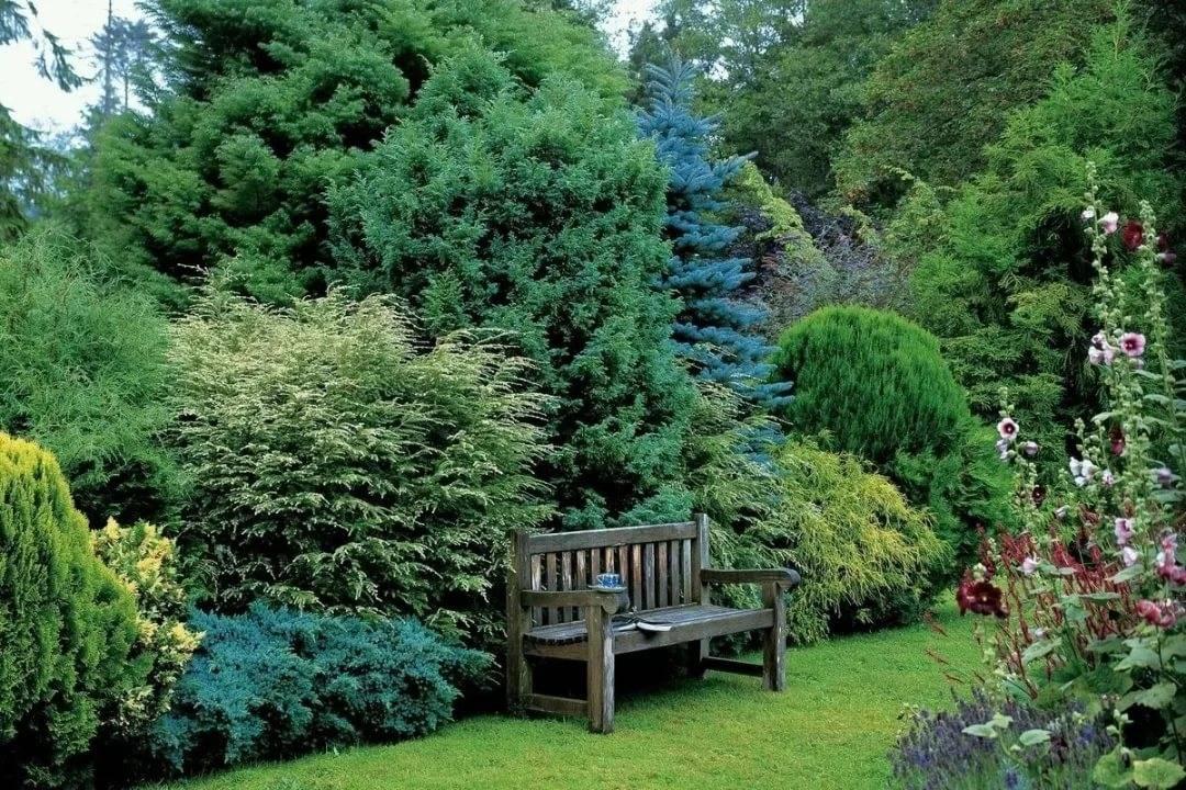 Лучшие сорта многолетних зимостойких кустарников - сад и клумба