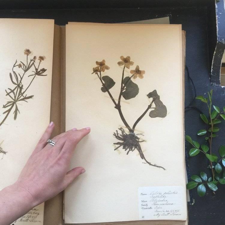 Задание на каникулы: учимся делать своими руками гербарий для школы и дома