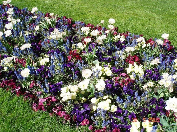 Хвойники в ландшафтном дизайне: растения для сада и дачи, готовые композиции перед домом с туями и можжевельником  - 41 фото