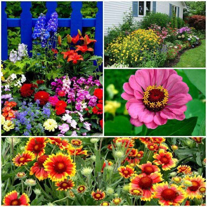 Цветы для дачи - 96 фото примеров