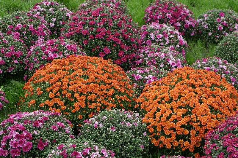 Многолетние цветы для дачи (88 фото): названия некапризных садовых многолетников. цветы для посадки на урале и в других регионах. какие можно посадить в августе?