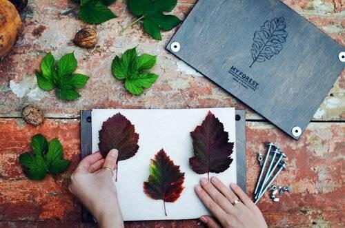 Как сделать альбом для гербария своими руками