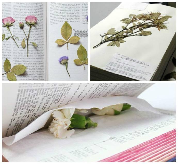Гербарий из листьев – как правильно сушить листья для гербария » сусеки