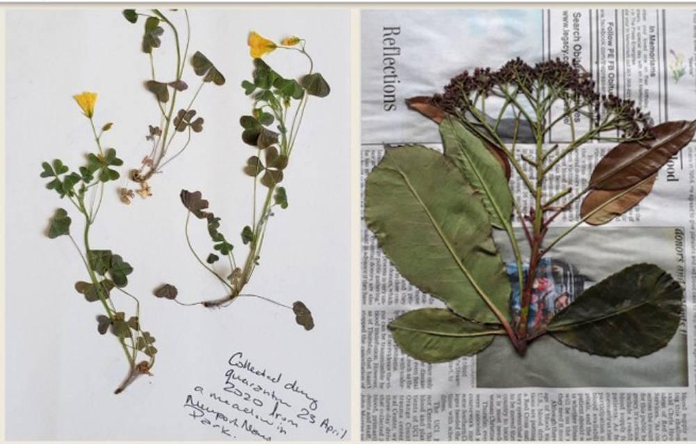 Как сделать гербарий из листьев деревьев и цветов, быстро высушить растения для аппликации