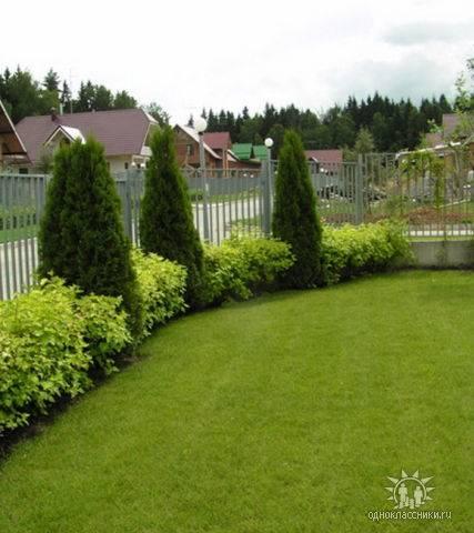 Живая изгородь: какие выбрать растения и как за ними ухаживать + фото  - 22 фото