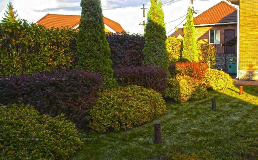 Живая изгородь (55 фото)