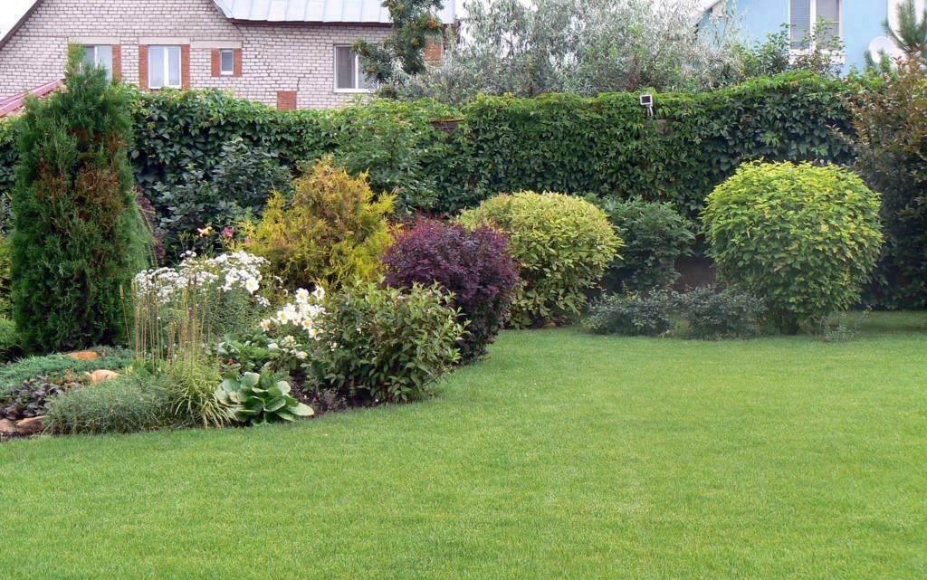 Живая изгородь — 55 фото быстрорастущих многолетних вечнозеленых растений (виды, фото, названия)