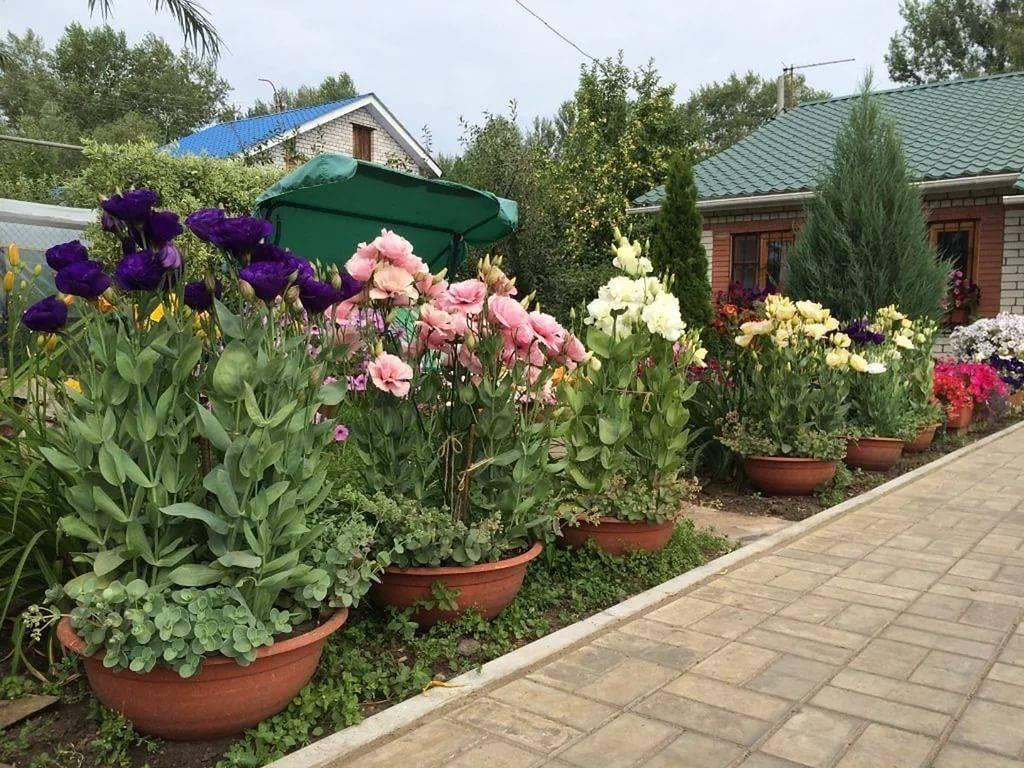 Описание садовых растений и их использование в ландшафте
