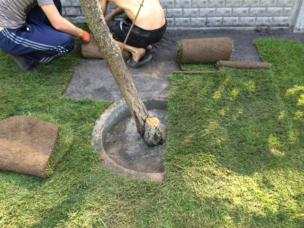 Как сделать газон на даче своими руками: все этапы подготовки и укладки в пошаговой инструкции