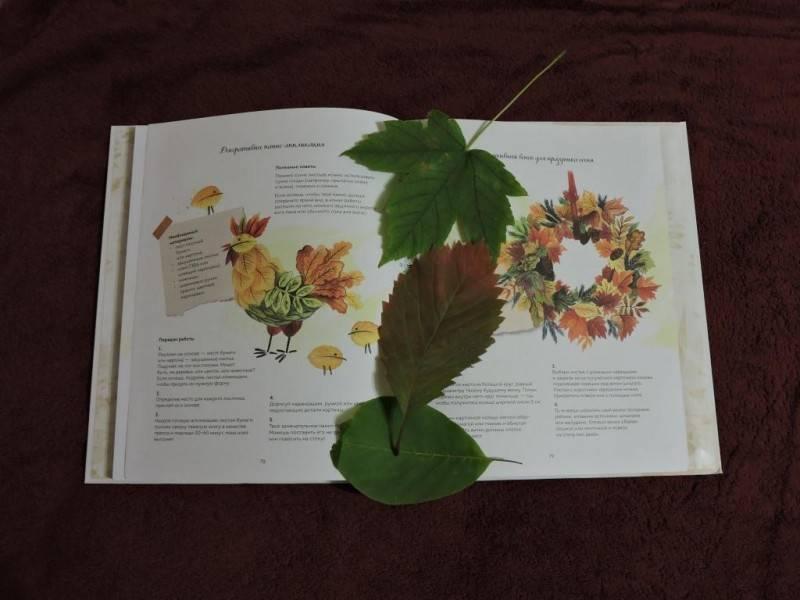 Учимся делать гербарий и альбом для него своими руками