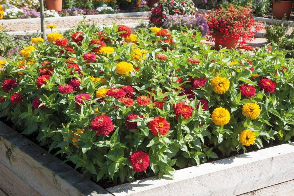 Цветочные клумбы своими руками: 150 фото идей, как красиво декорировать и оформить цветник возле дома