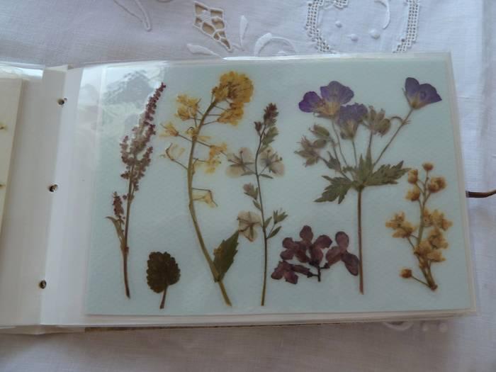 Гербарий (38 фото): что это такое? как сделать красивый гербарий из цветов и листьев в альбоме или в стекле? как правильно собирать растения и сушить их прессом?