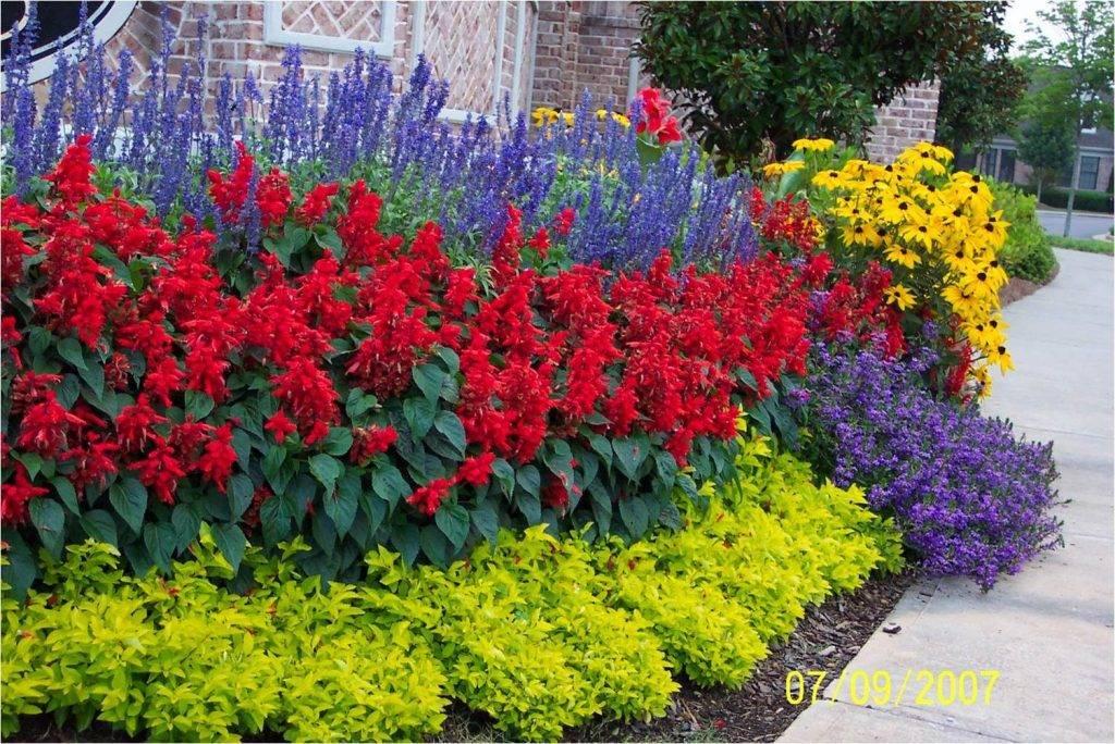 Неприхотливые тенелюбивые растения для сада многолетние: фото и название - sadovnikam.ru